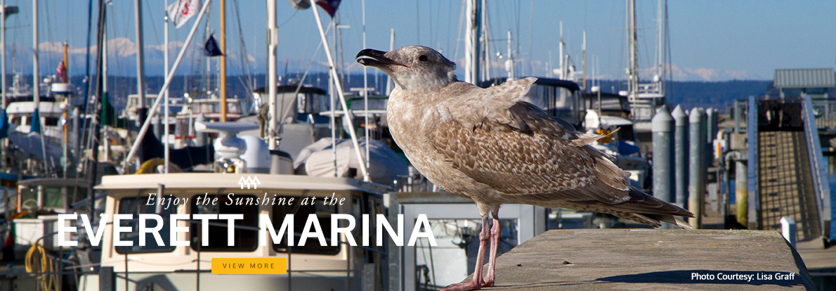 Get out and Explore -  Everett Marina