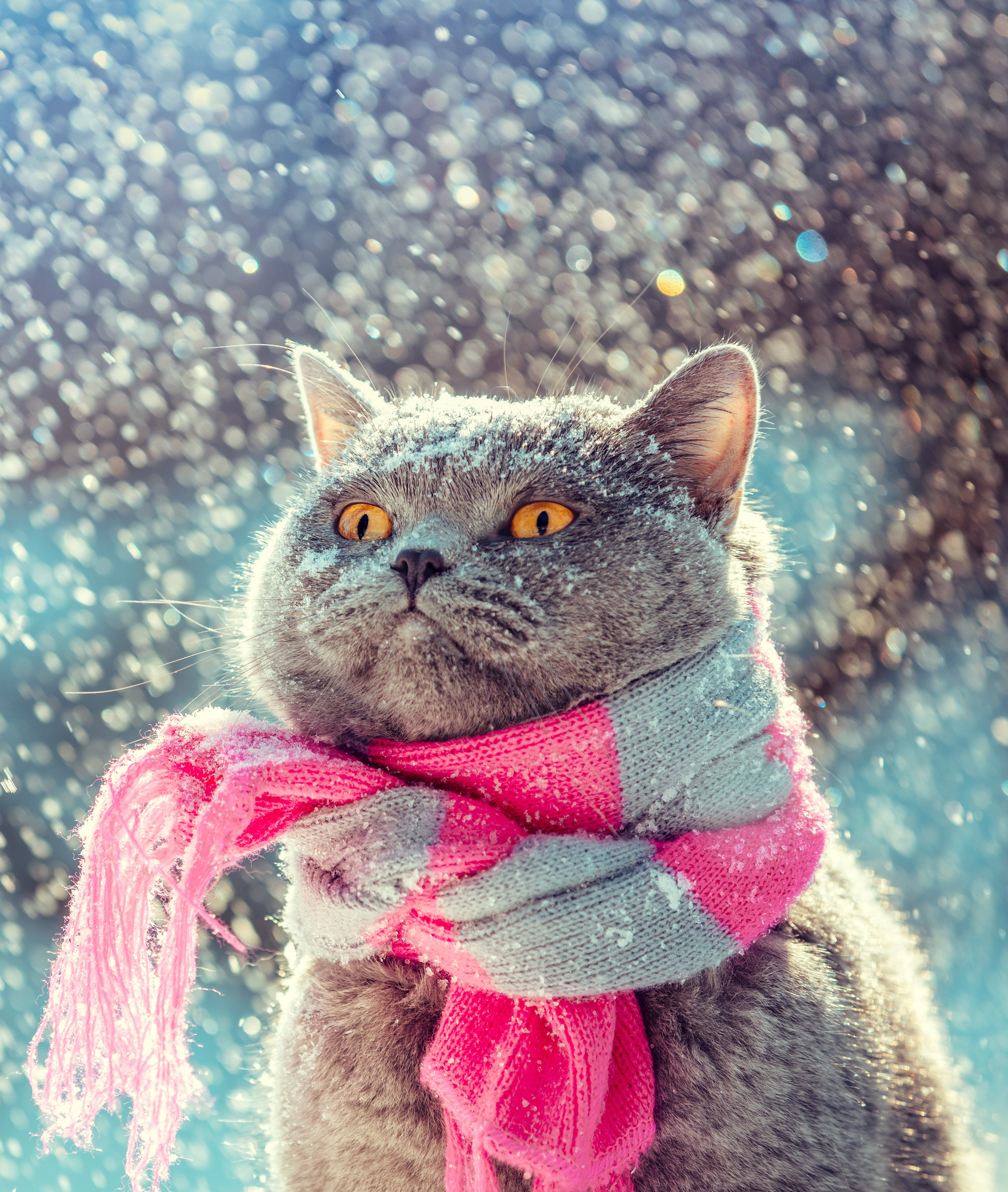 A cat wearing a scarf in the snow