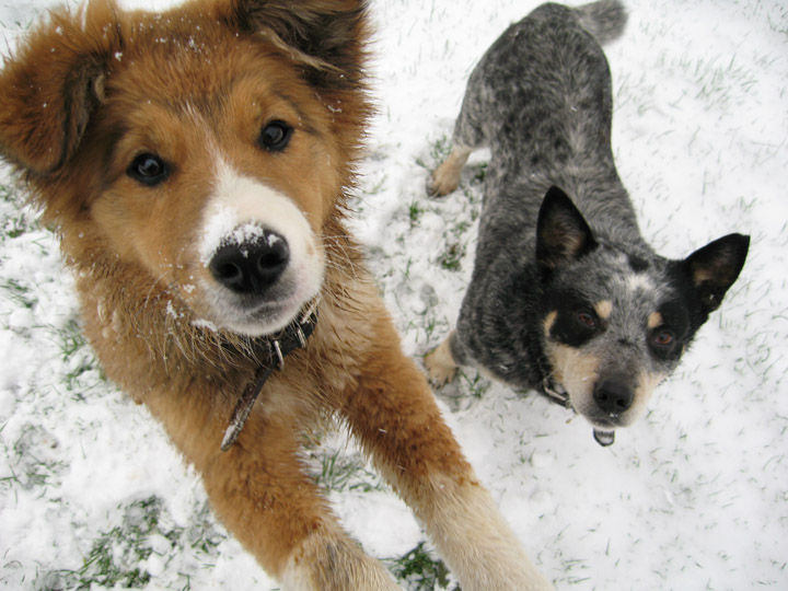 Make sure your pets have adequate protection from the cold weather